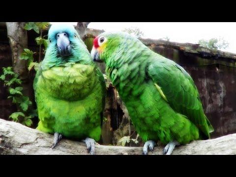 Tropical Birdland HD (40min)