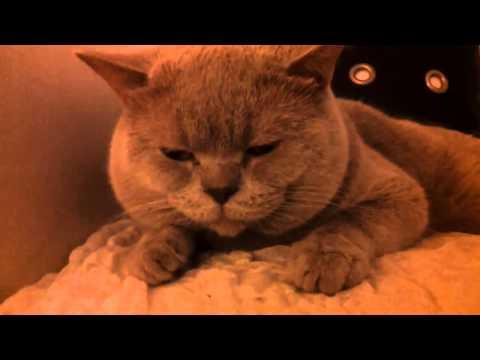 Видео: Смешные коты и кошки ДО СЛЁЗ Приколы с Котами 2017
