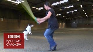 Собака установила мировой рекорд по прыжкам на скакалке