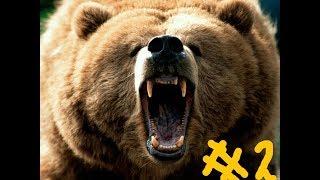 Фильм про огромного медведя, пародия на годзиллу 2 часть.