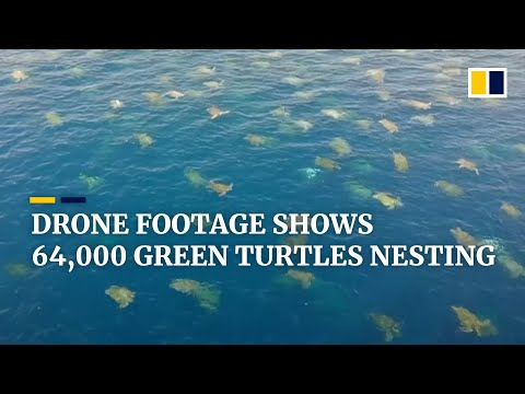 Scientists film tens of thousands of sea turtles nesting in Australia's Great Barrier Reef