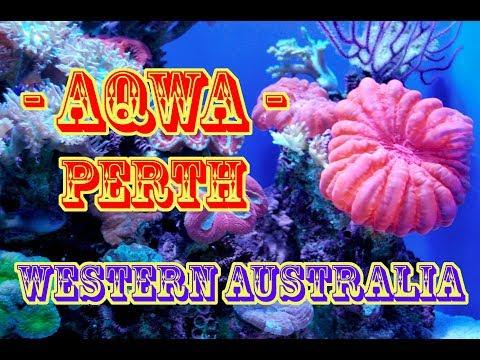 Aqwa - Underwater Aquarium - Perth - Western Australia || Brazilian And Filipina Living In Australia
