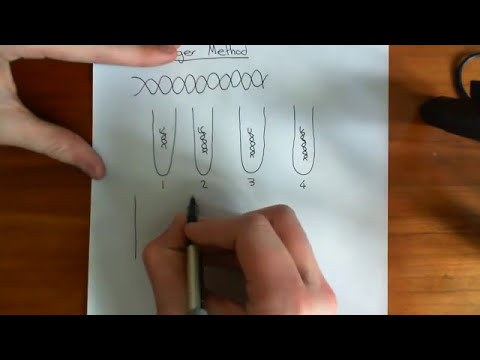 DNA sequencing - The Sanger Method