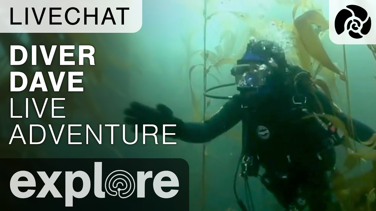 Diver Dave Channel Island Live Adventures - Underwater Live Chat