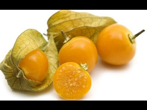Golden Berry Health Benefits