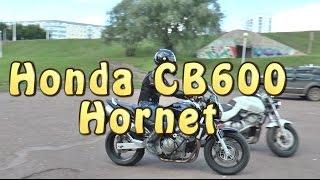 докатились! Honda CB600 Hornet. Статус Кво