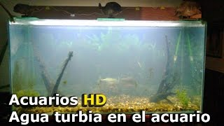 ACUARIO : AGUA TURBIA COLOR BLANCO, MARRON Y VERDE ¿ POR QUE ?