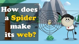 How does a Spider make its web? | #aumsum #kids #education