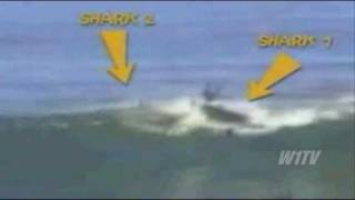 Orca & Shark Attaks - Monsters Of The Sea