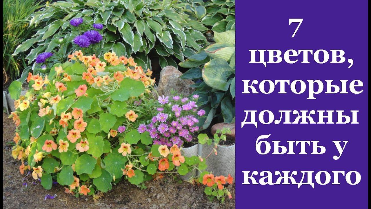 ❀ 7 цветов, которые обязательно должны быть на каждом дачном участке