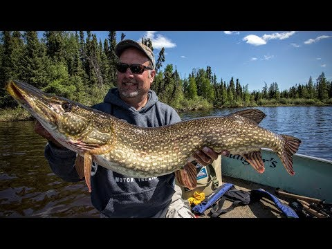 Trophy Pike — Angling Edge TV