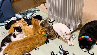 ストーブの前を猫たちに占拠されました