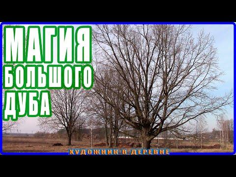 Вопрос: Откуда взялось дерево Дуб?