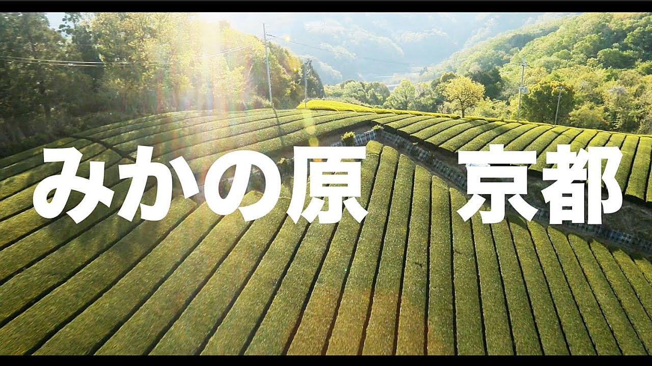 【空の旅#83】「撮れたて!お茶の新芽は日陰がお好き」空撮・多胡光純 みかの原_Kyoto aerial