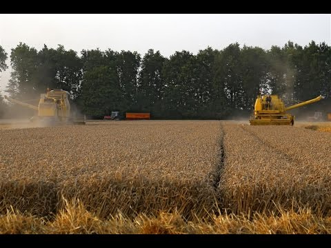Two New Holland Clayson combines in action | 140 & 1545 | Wheat harvest 2014 | Holland
