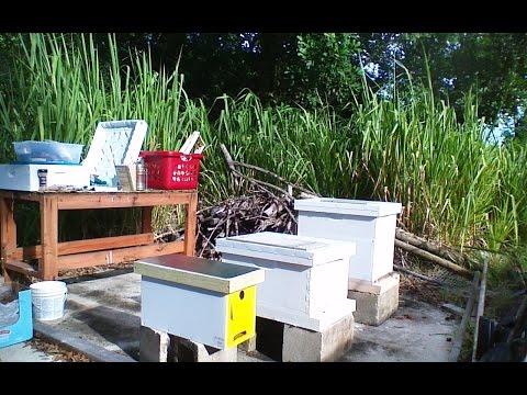 Hive split and cross comb repairs
