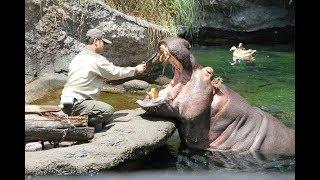天王寺動物園(大阪市天王寺区)で6月4日、「歯と口の健康週間」記念イ...