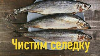 Как почистить селедку? Чистим селедку дома. Разделка рыбы.