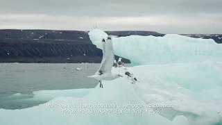 Arctic 2017: Conserving Tallurutiup Imanga
