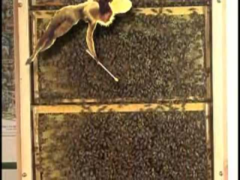 A Guided Tour Of A Honey Bee Observation Hive Youtube