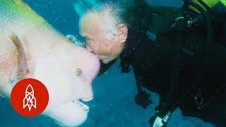 صداقة مميزة بين غطاس ياباني وسمكة إستمرت لعقود (فيديو)