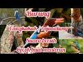 Raja Udang Tengkek Udang Gacor Cocok Buat Masteran  Mp3 - Mp4 Download
