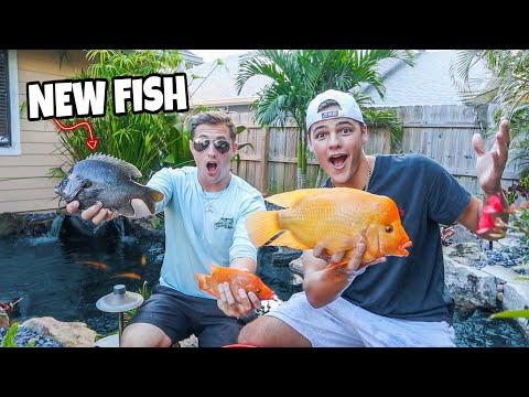 NEW *COLORFUL* FISH For My BACKYARD POND!!