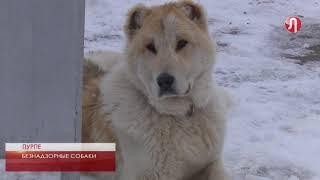 За нарушения правил содержания домашних животных – штраф