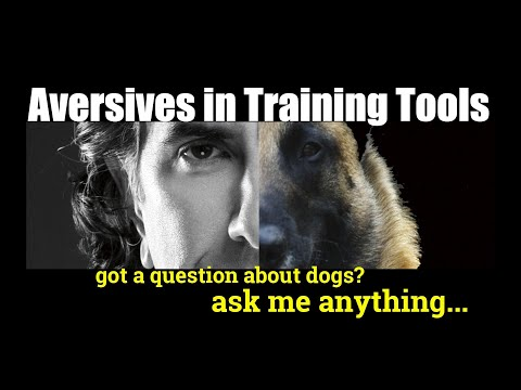 Corrections are Ignored When Using a Flat Collar - ask me anything Dog Training Videos