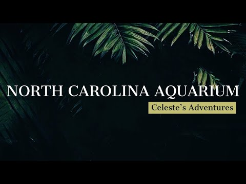North Carolina Aquarium | Fort Fisher