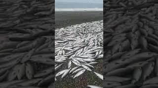 Миколаївськ-на-Амурі/Охотське море