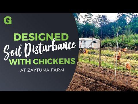 Designed Soil Disturbance with Chickens