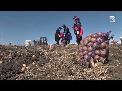 Сельский кластер - Картофельная ферма Анатолия Косова (18.09.2019)