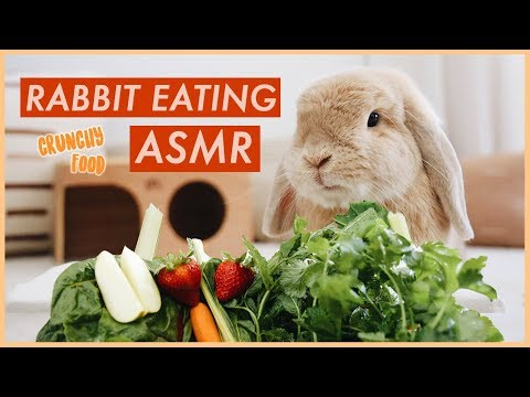 Bunny Eating Crunchy Food ASMR | WahlieTV