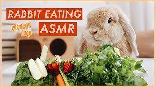 bunny-eating-crunchy-food-asmr-wahlietv