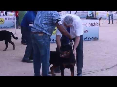 APKC DOG SHOW HYDERABAD 2016