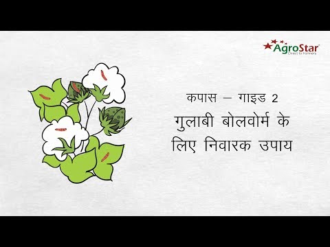 Cotton-Guide 2-Protect your cotton crop from Pink Bollworm