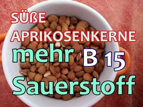 VITAMIN B 15 süße Aprikosenkerne viel SAUERSTOFF in die ZELLEN