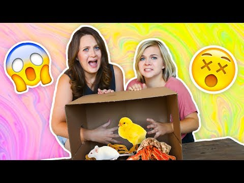WHATS IN THE BOX CHALLENGE! 😱 (ft. Missy) // SoCassie