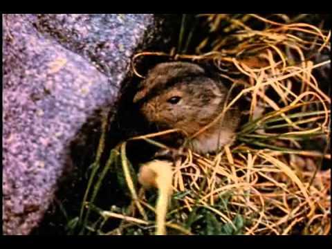 Spring Comes to the Subarctic  (W. Breckenridge Circa 1955)