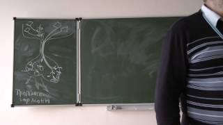 5.11.13 Физиология животных - Сергеев И.Ю. часть 2