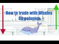 How to trade with Whales on Poloniex