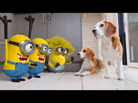 Life with Minions and My Dogs : Real Life Animation!