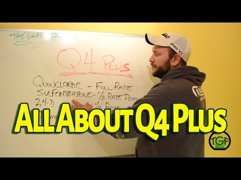 All About Q4 Plus - The Grass Factor