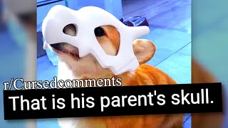 r/Cursedcomments | CURSED POKEMON FACTS FEAT. CUTE DOG
