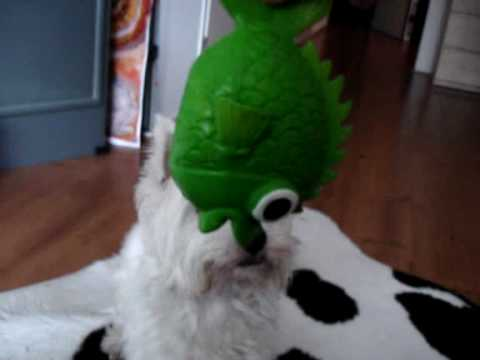West Highland White Terrier 'Wessel en de Vis'