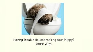 Housebreaking, Can't Housebreak My Puppy - Know How To Do It Right
