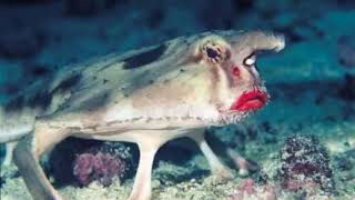 Top 10 Most Amazing Animals of The World