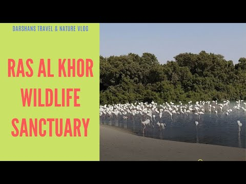 Dubai's Wildlife sanctuary at Ras Al Khor