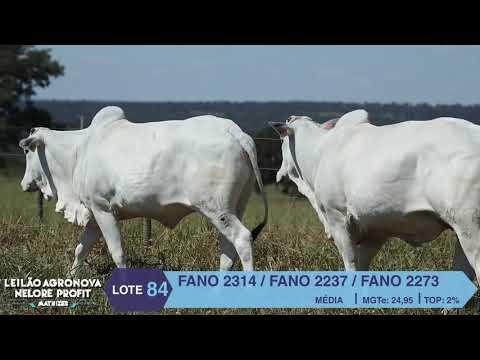 LOTE 84 FANO 2314 X 2237 X 2273